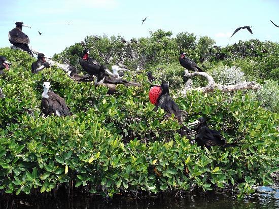 Barbuda Express : Bird sanctuary