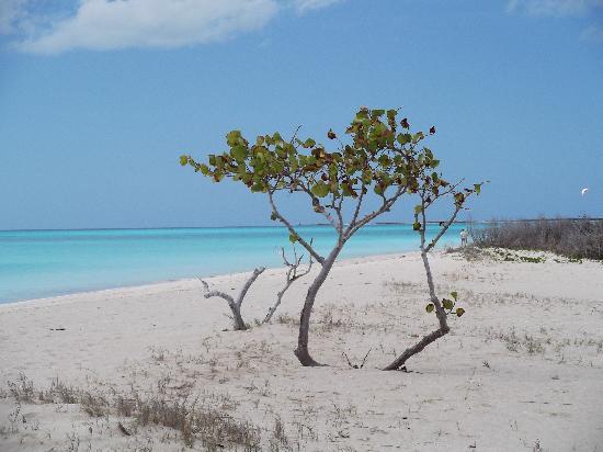 Barbuda Express : Beach