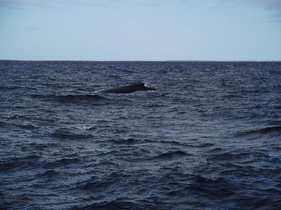 Barbuda Express: A whale!