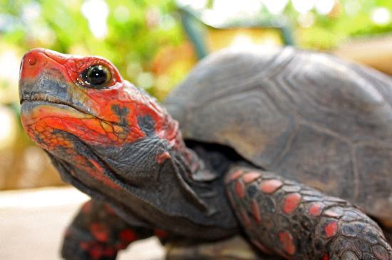 O Veleiro Bed and Breakfast: The pet turtle