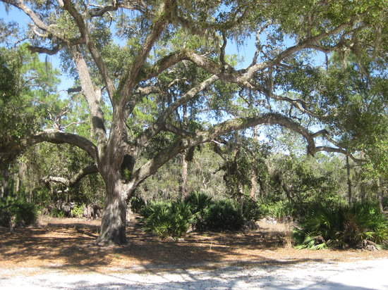 Moss Park Orlando 2019 All You Need To Know Before You
