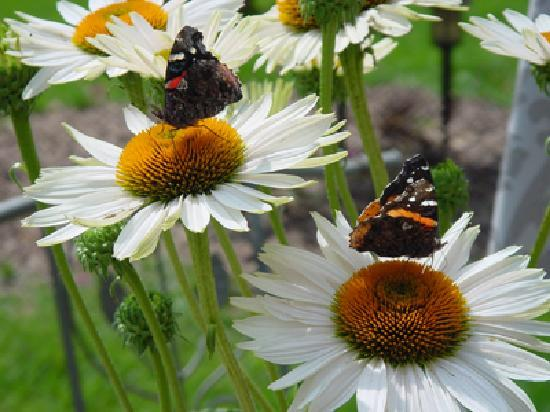 The Seasons Bed and Breakfast: Butterflies in Garden