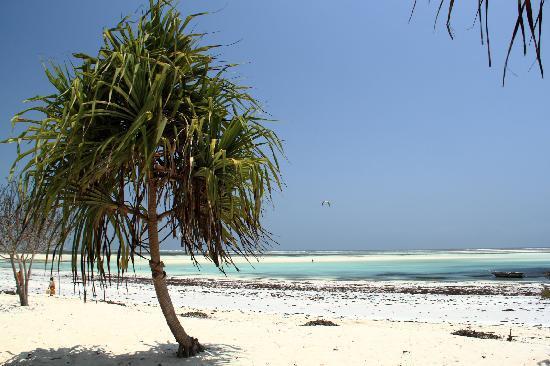 نبتون بواني بيتش ريزورت آند سبا - يشمل جميع الخدمات: Spiaggia