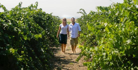 ‪‪Pasco‬, واشنطن: Learn about the winemaking process through vineyard walks - Photo by: www.winecountrycreations.c‬