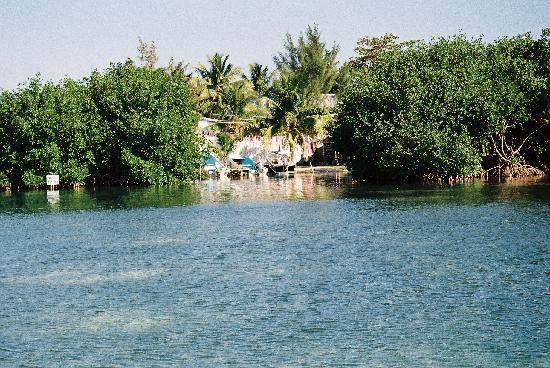 Caye Caulker, Belize: Particolari dal mare