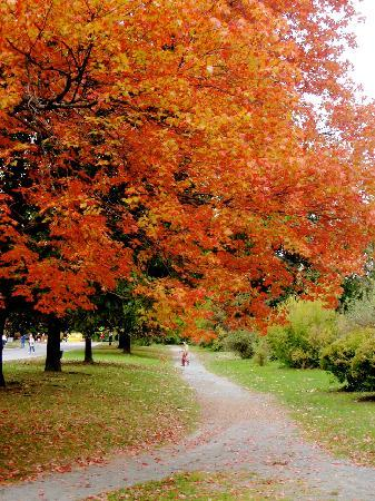 Washington Park : Beautiful in the fall!
