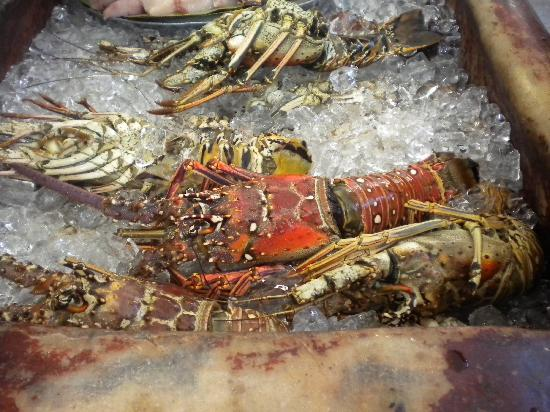 Captain Cook Restaurant : photo des langoustes disponibles