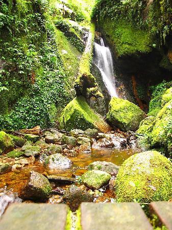 Mount Kinabalu: Mersilau trail #2