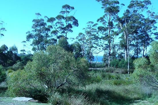 Freycinet Eco Retreat: Fantastic view from the shack