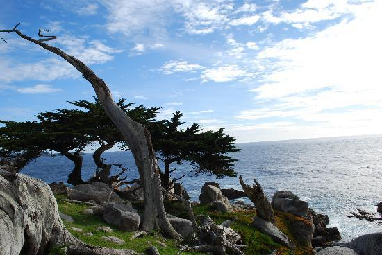 17-Mile Drive: beautiful view