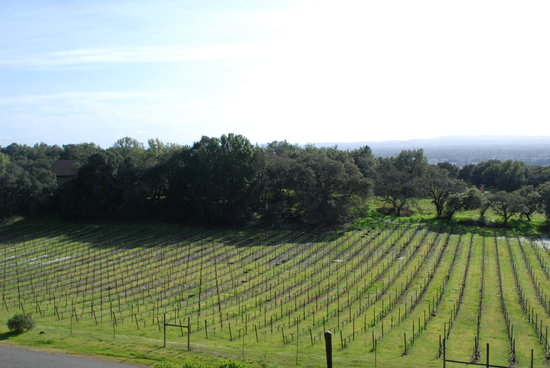 Benovia Winery : vineyards