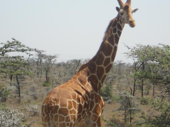 Ol Pejeta Bush Camp, Asilia Africa: One of the neighbours ....