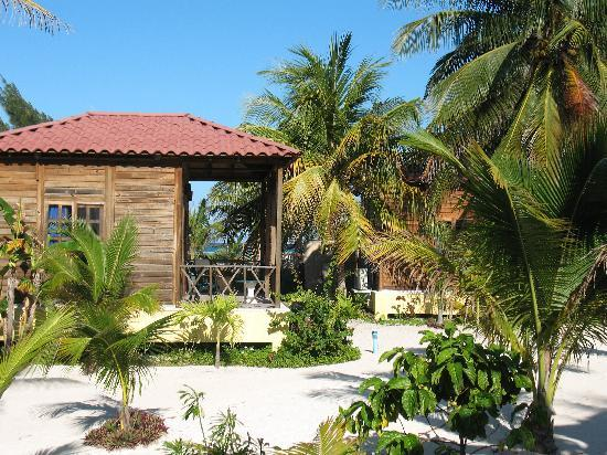 Petit Lafitte: View from Bungalow 6