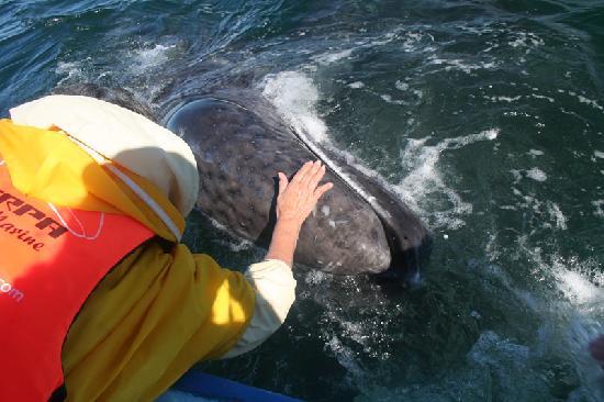 Guerrero Negro, Mexico: ¡tocando la ballena!