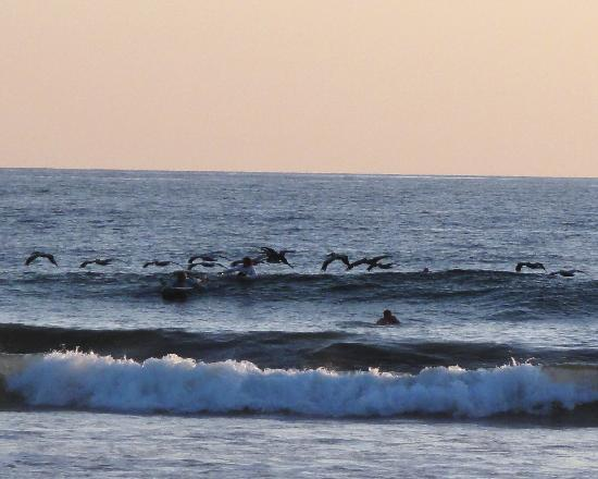 Nosara, Costa Rica: Pelicans on the water