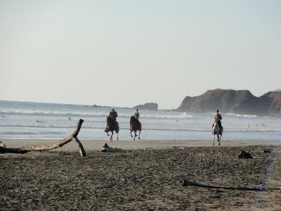 Nosara, Costa Rica: Horses on the Beach