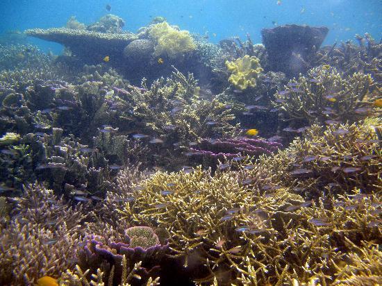 Sorido Bay Resort: Amazing reefs in Sorido Bay's frontyard