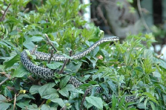 Snake Park: Provided by : Museums of Kenya