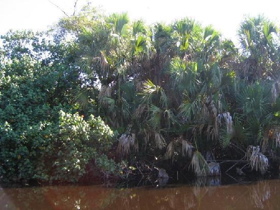 Casa Sol Zipolite: expédition au crocrodile