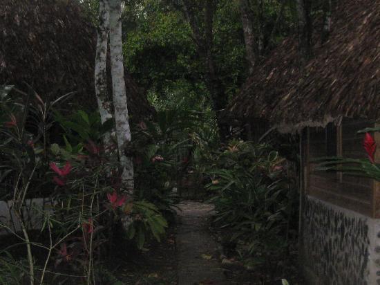 Cohune Palms River Cabanas: path through cabanas