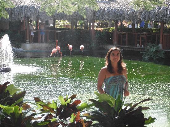Natura Park Beach - EcoResort & Spa: Laguna de los flamencos