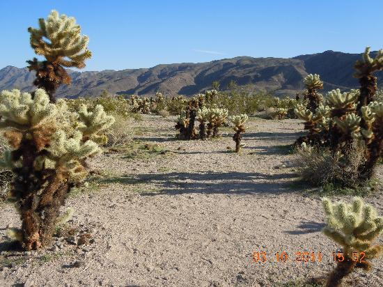 Twentynine Palms, CA: The desert is at your doorstep.