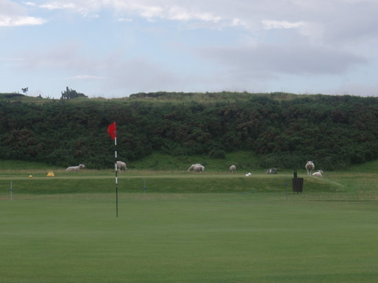 ‪Brora Golf Course‬