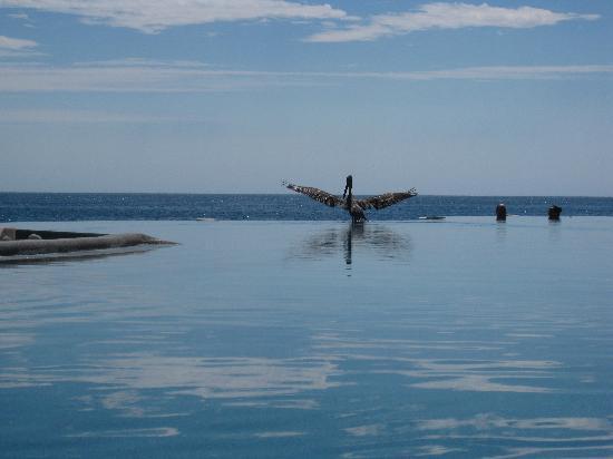Las Ventanas al Paraiso, A Rosewood Resort: More Pool