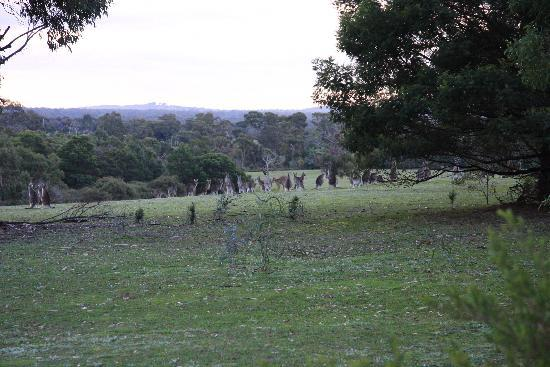 Boroka Downs: A Roo or two