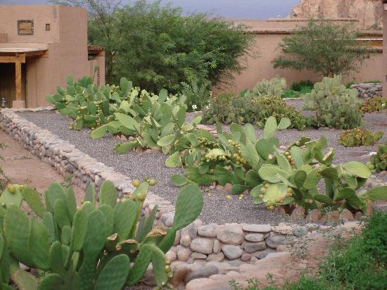Alto Atacama Desert Lodge & Spa: cactus