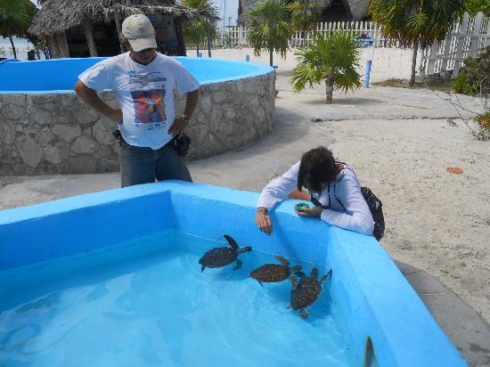 Sea Turtle Hatchery: dando de comer a las tortugas