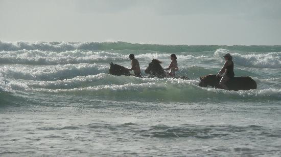 Equi Evasion : Une baignade avec les chevaux