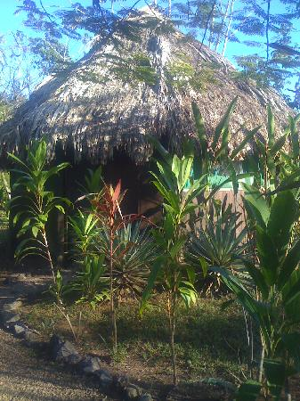 Sun Creek Lodge : One with nature, beautiful thatched roof