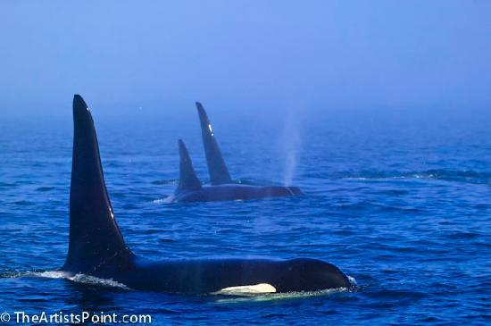 The Artists Point Bed, Breakfast and Phototours: Prime whale watching location