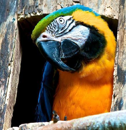 Bird Kingdom: HELLO!