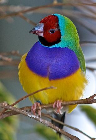 Bird Kingdom: Coat of Many Colours!