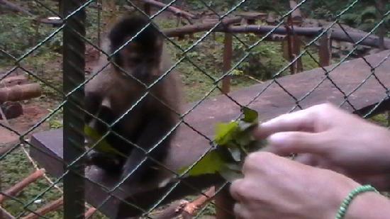 Güiráoga: alimentando monitos