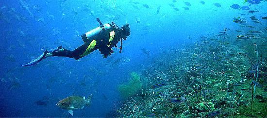 โรงแรมคาจาเน ทูลัมเบน: diving