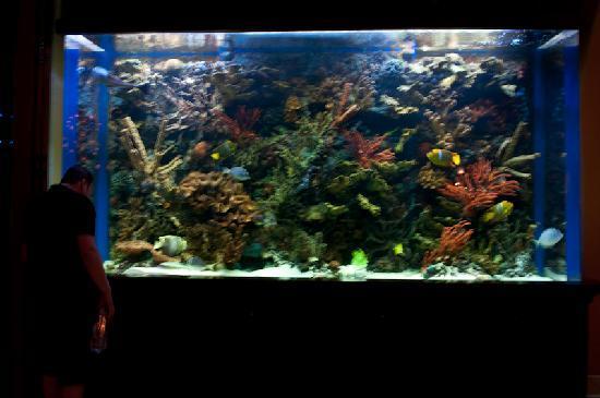 Hotel Aquarium Picture Of Hilton Los Cabos Beach Golf