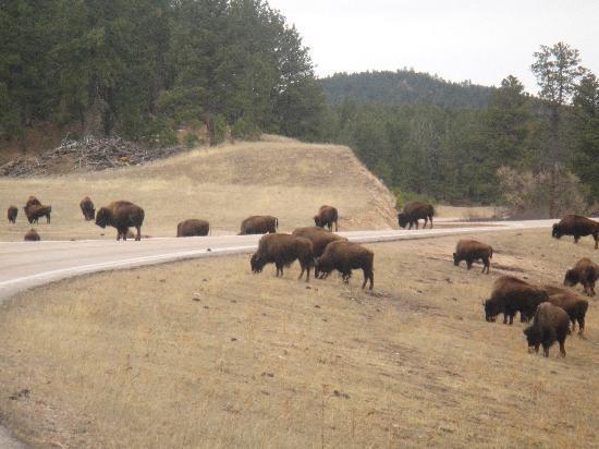 Custer State Park照片