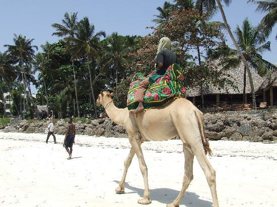 Travellers Beach Hotel & Club : camel rides
