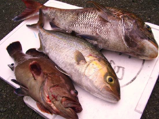 Business Minshuku Charm: 5月の釣果の一部(当日の夕食)