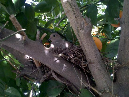 Little Paradise Hotel: Nesting dove