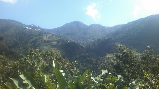 Blue Mountains National Park, Jamaica: 風景1