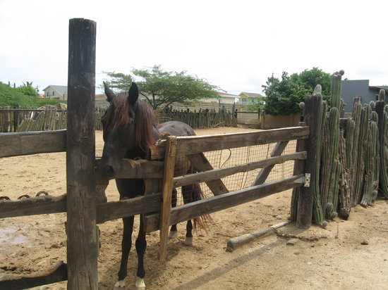 Rancho Notorious: One of the horses