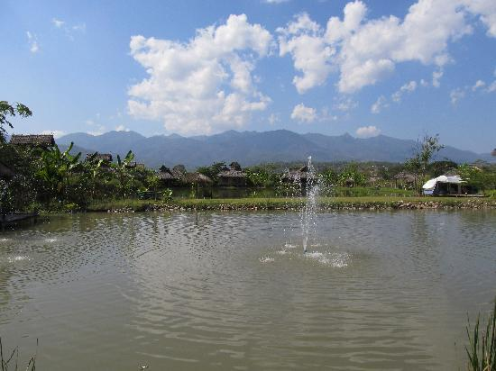 Overview of Bueng Pai farm