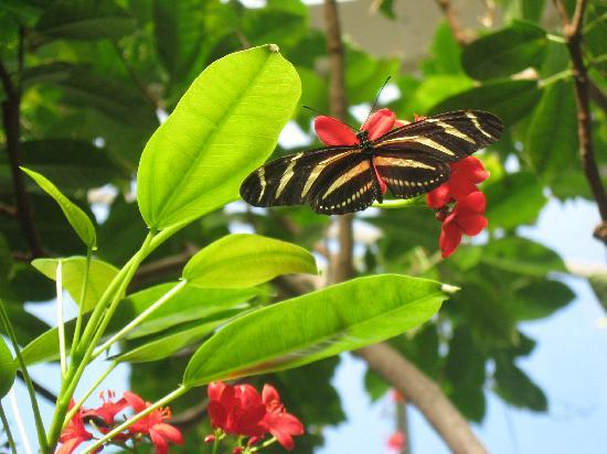 Franklin Park Conservatory and Botanical Gardens: temporary butterfly exhibit in a tropical room