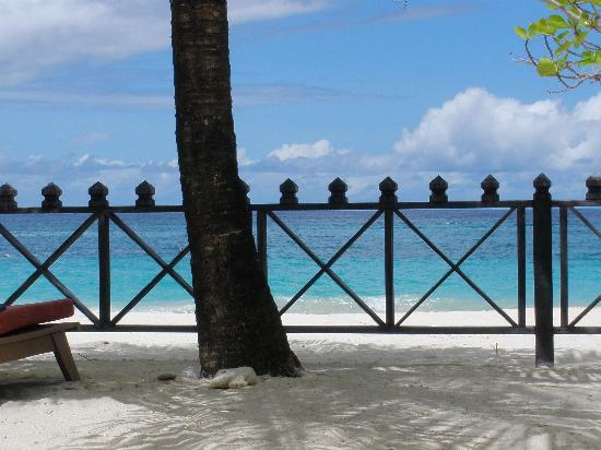 Coyaba Beach Resort: Underneath a coconut tree!