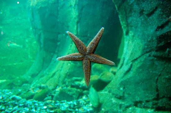Universeum: Stella Marina