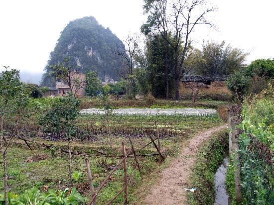 Zhenmei Holiday Hotel Guilin Yangshuo Aiyuan: Yulong River walk takes you through Farmland